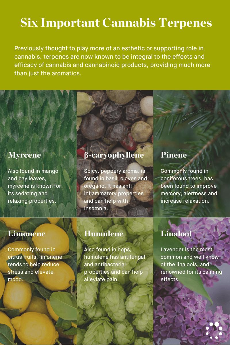 Six important cannabis terpenes